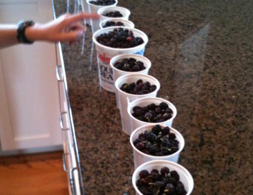 Memorable Mulberry Pie